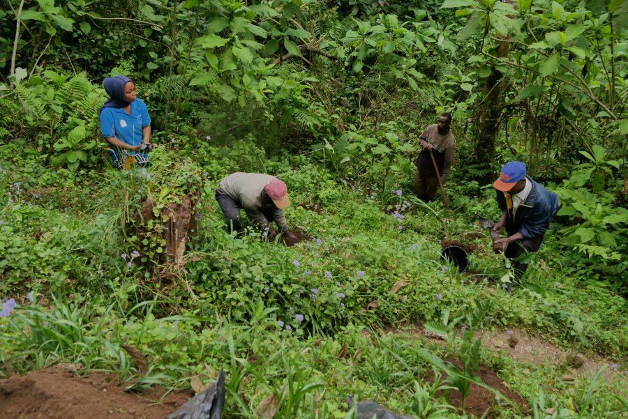 tree planting in Northern Tanzania